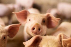 ethische gruende für vegane ernaehrung